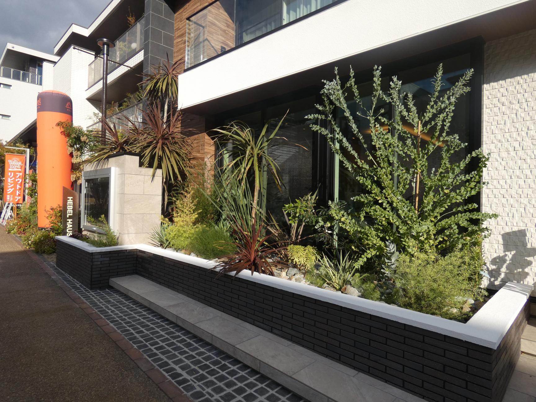オーストラリアの植物の花壇風景